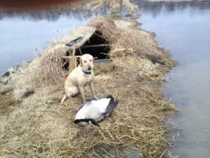 Annie w 1st Goose